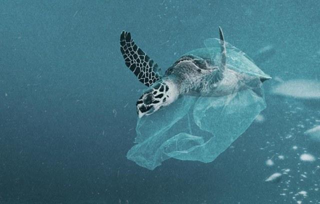 Moins de plastique, plus de poisson dans la mer